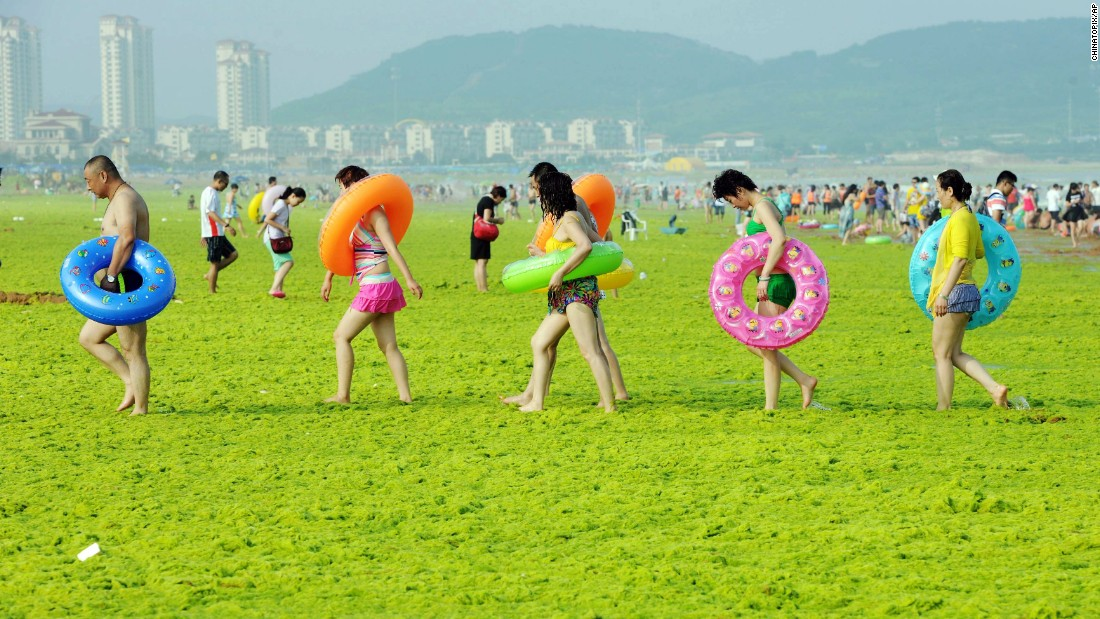 People in Qingdao, China, walk across a beach covered by seaweed on Friday, July 24. In recent summers, Qingdao beaches have been plagued by large seaweed drifts from the Yellow Sea.