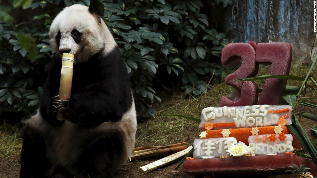 "Jia Jia, the oldest giant panda living in captivity, eats beside a birthday cake of ice and vegetables as she celebrates her 37th birthday Tuesday, July 28, at Ocean Park Hong Kong. See that and more in CNN's roundup of<a href=""http://www.cnn.com/2015/07/31/world/gallery/week-in-photos-0731/index.html"" target=""_blank""> this week in photos.</a>"