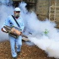 Dengue insecticide spraying