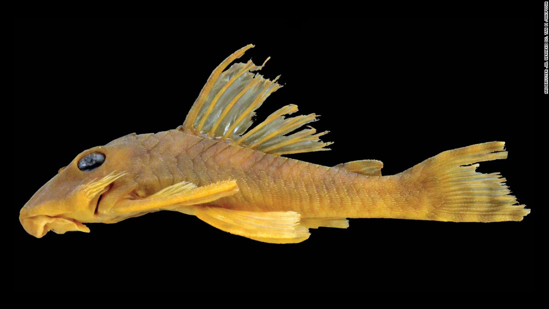 New scary looking fish species comes from ocean 39 s dark for Scientific name of fish