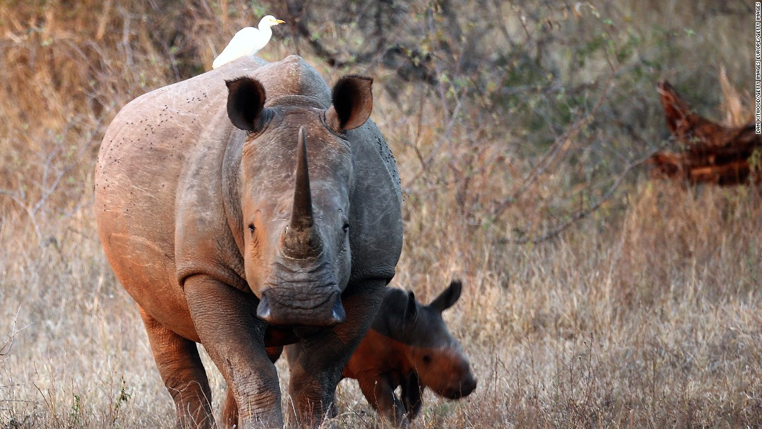 Swaziland wishes to allow a regulated trade in rhino horns  collected from natural deaths or recovered from poaching.