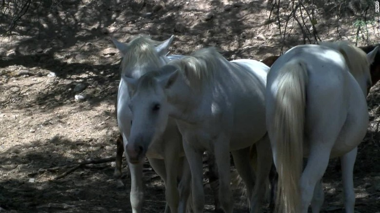 wild horses forest service controversy pkg _00004730