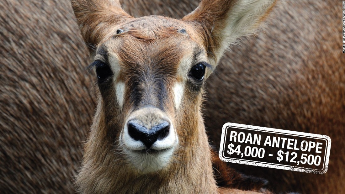 "Mainly found roaming the savannahs of West and Central Africa, the Roan antelope can<a href=""https://www.awf.org/wildlife-conservation/roan-antelope"" target=""_blank""> run up to 35 miles per hour</a>. Hunters can pay up to $12,500 to be hot on their heels in South Africa, or $4,000 in Tanzania. The animal's conservation status is of <a href=""http://www.iucnredlist.org/details/10167/0"" target=""_blank"">""least concern"".</a>"