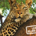Trophy Animals Leopard