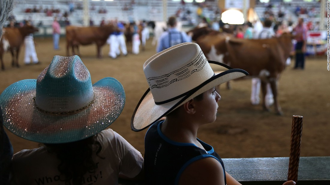 Youngsters in cowboy hats watch a cattle competition on August 14.