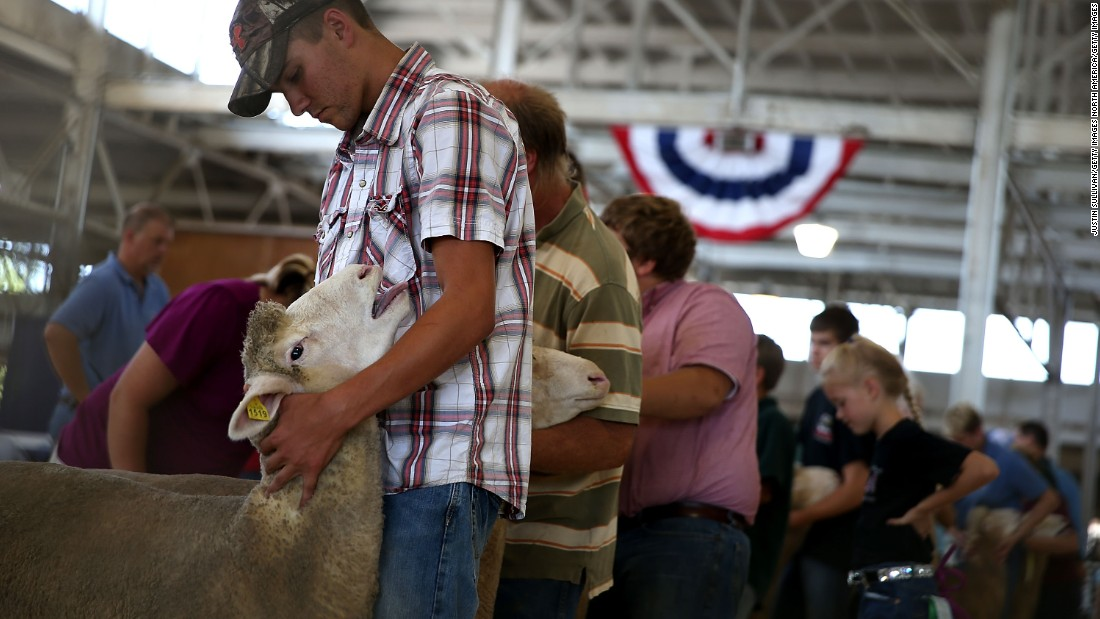 Competitors line up with their sheep for judging on August 14.