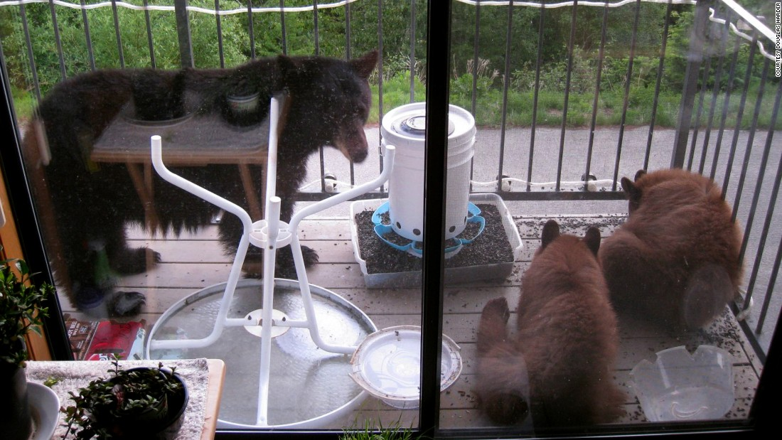 A family of bears climbed up the side of Douglas Harder's condo in May and helped themselves to some birdseed. It would not be the last time a bear paid a visit to his Sandpoint, Idaho, home.