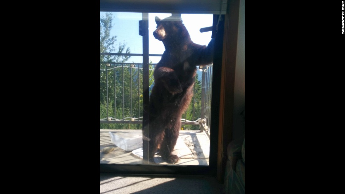 Harder believes the same bear cub came calling Thursday while he was home.