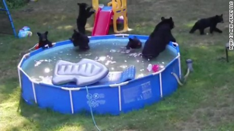 bear family in kiddie pool pkg_00000921.jpg