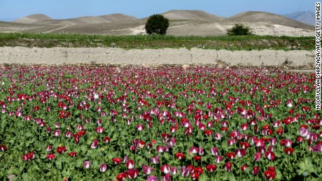 Poppies bloom in a field on the outskirts of Jalalabad, capital of Nangarhar province in 2014.