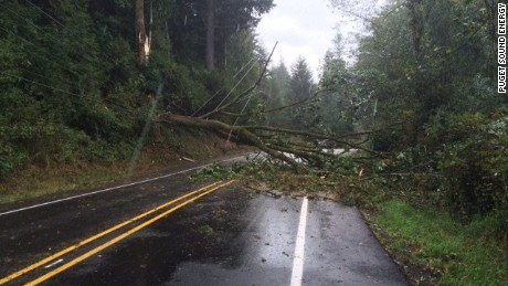 A powerful storm unleashed strong winds that toppled trees and power lines in the Northwest, leaving two people dead: a man and 10-year-old girl.