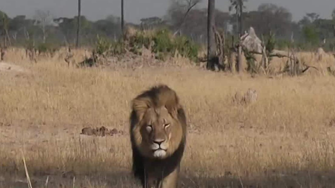 Walter Palmer, the man who killed Cecil the lion, returns to his dental practice