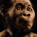 RESTRICTED Homo Naledi Nat Geo 6
