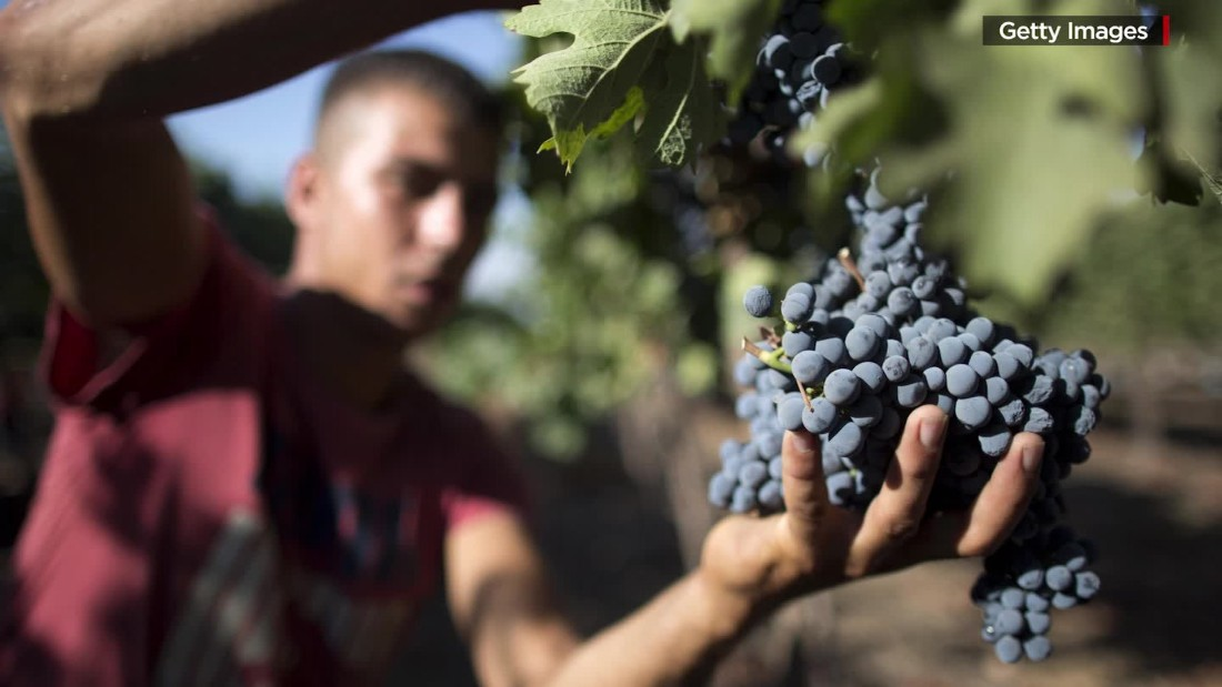 For Alzheimer's patients, resveratrol brings new hope