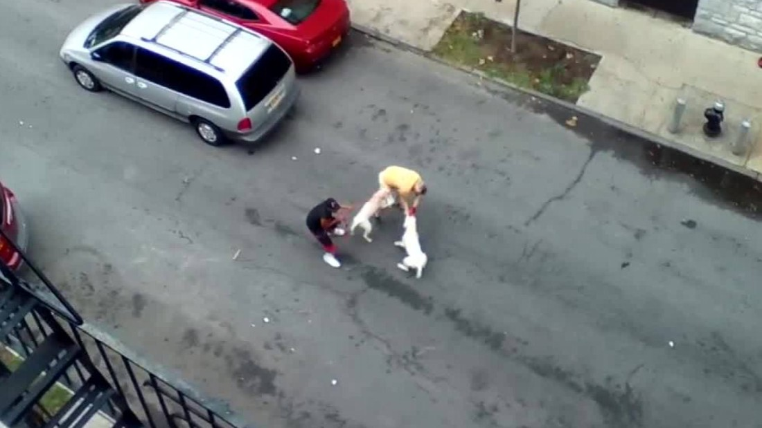 New York woman arrested after pit bulls maul man