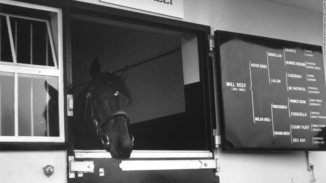 Mill Reef won almost everything on the flat from the Epsom Derby to the Prix de l'Arc de Triomphe in the early 1970s. The U.S.-bred thoroughbred is ranked as one of the leading horses of all time.