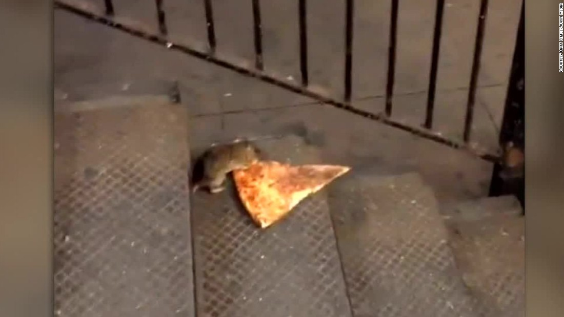 "A hungry varmint nicknamed Pizza Rat captivated our hearts this summer with his determination to make off with a slice bigger than himself. It's one of those meme-worthy moments that makes for a great Halloween costume idea. Wear your best gray sweatsuit, slap on a rat nose from Party City and swipe a slice of pie from the party table, perhaps carrying it in your new <a href=""http://time.com/4056307/portable-pizza-pouch/"" target=""_blank"">portable pizza pouch</a>. Voila!"