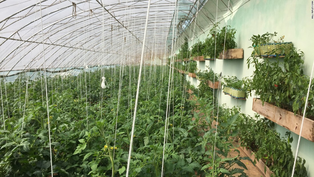 One of North Korea's very first greenhouses, first visited by Kim Il Sung more than three decades ago, and again by his grandson Kim Jong Un recently, is pictured. This greenhouse provided a model for year-round indoor farming to allow North Korea to grow vegetables throughout the warm, humid summers and cold, dry winters.