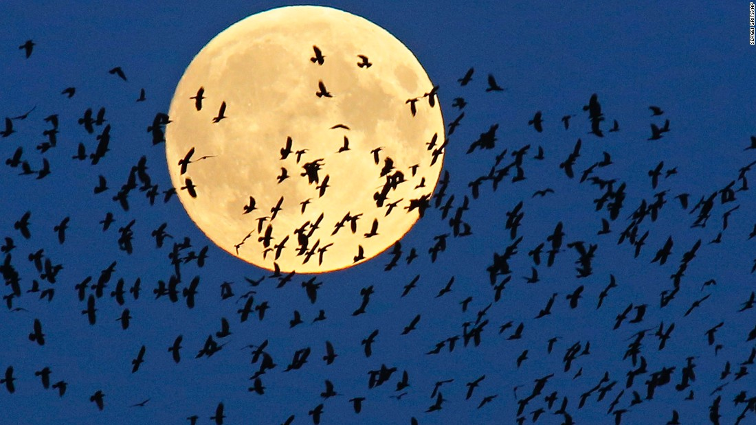 A flock of birds flies by as the supermoon rises in Mir, Belarus.