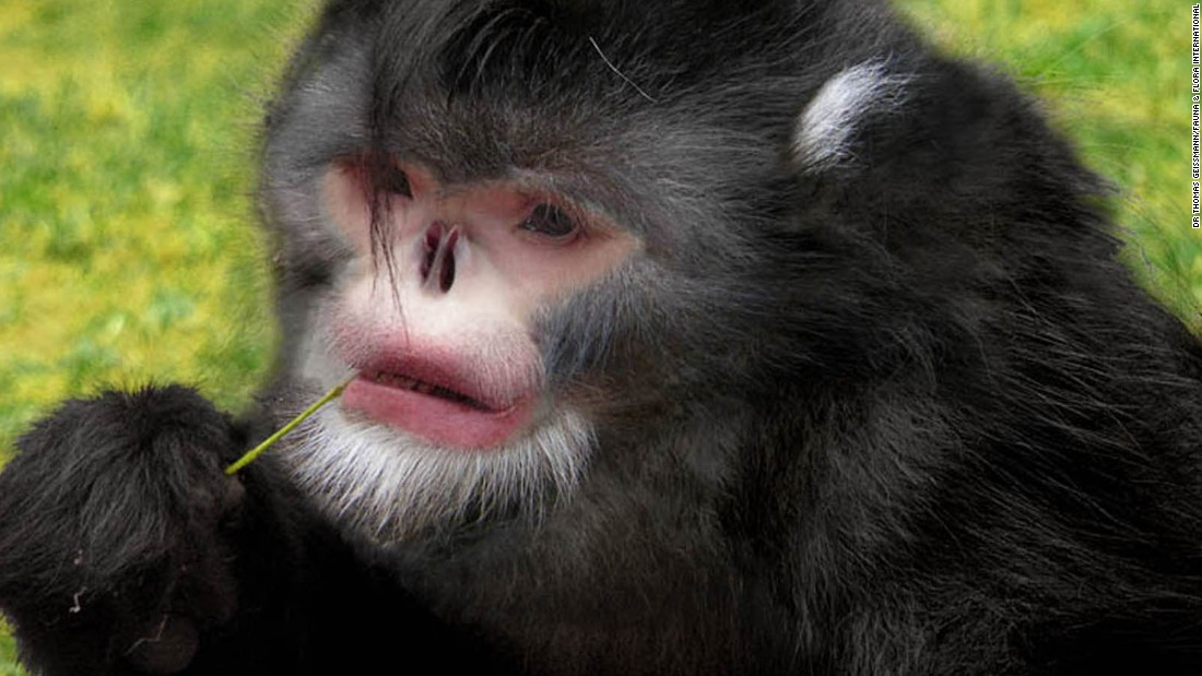 From 'Dracula' fish to snub-nosed monkeys: New species found in Himalayas