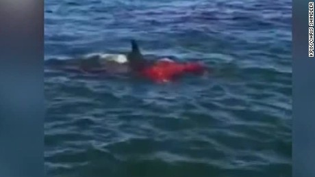 Bloody shark attack caught on camera
