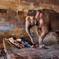 Steve McCurry elephant