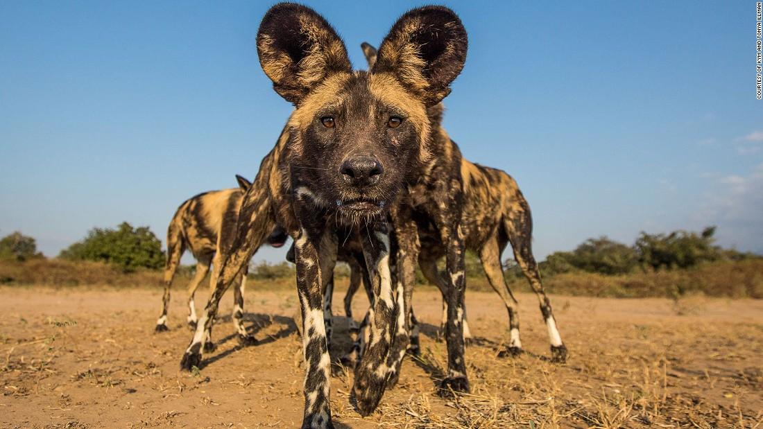 Africa on Safari  photographer tips   CNN Travel. Africa on Safari  photographer tips   CNN Travel