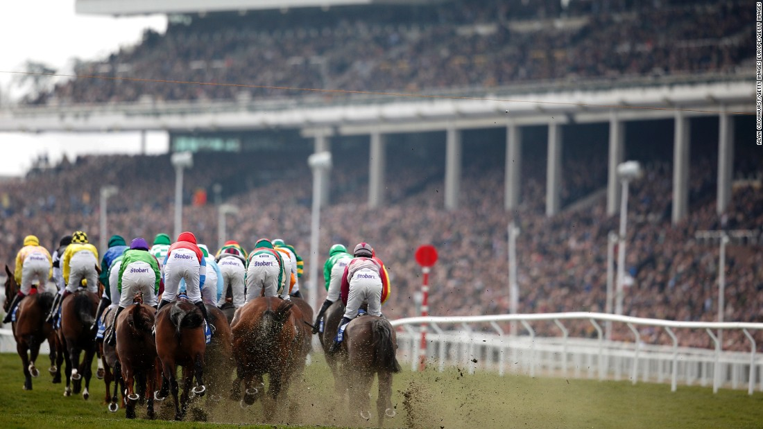 Cheltenham is one of the most prestigious racecourse in Britain and plays host to an annual festival, the highlight of which is the Cheltenham Gold Cup.