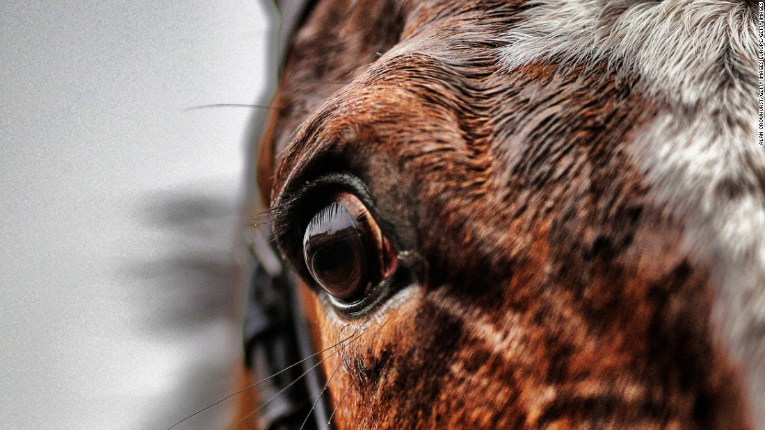 A horses eye at Fontwell racecourse in February 2015. Located in West Sussex, Fontwell is the only figure of eight jumps track in Britain.