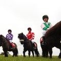 Shetland Pony Gold Cup 7