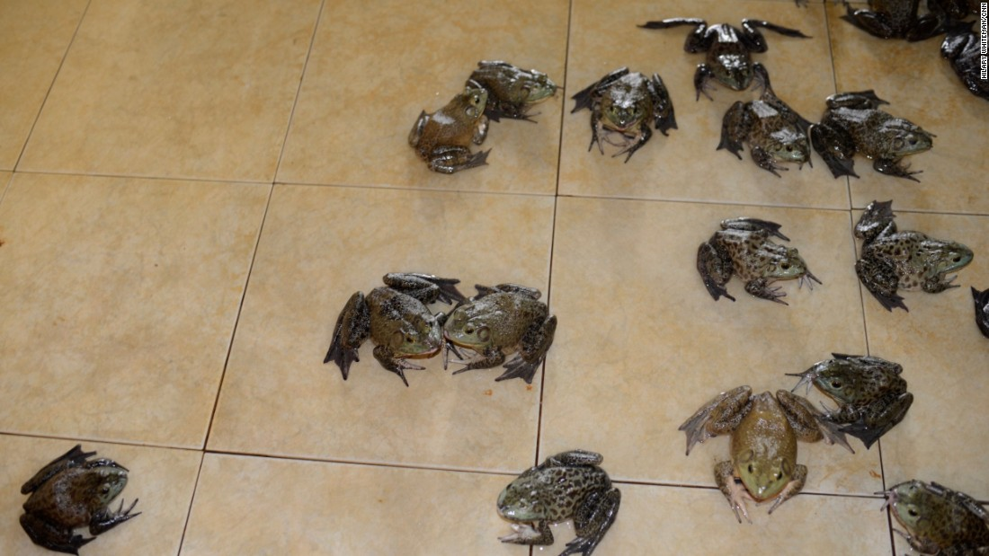The adult frogs are frequently hosed to keep them cool and wet. When they reach a certain size they're taken for slaughter. In females, the oviducts are removed and either dried or processed for sale as hashima.