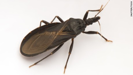 'Kissing bug' case in Delaware raises alarm for summer