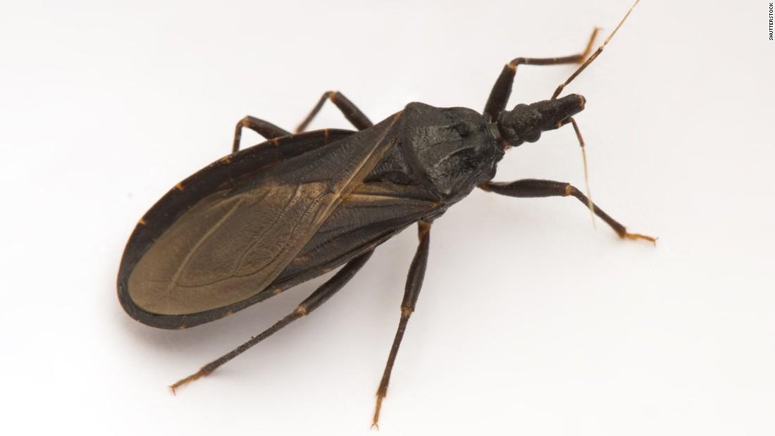 'Kissing bug' case in Delaware raises summer concerns - CNN