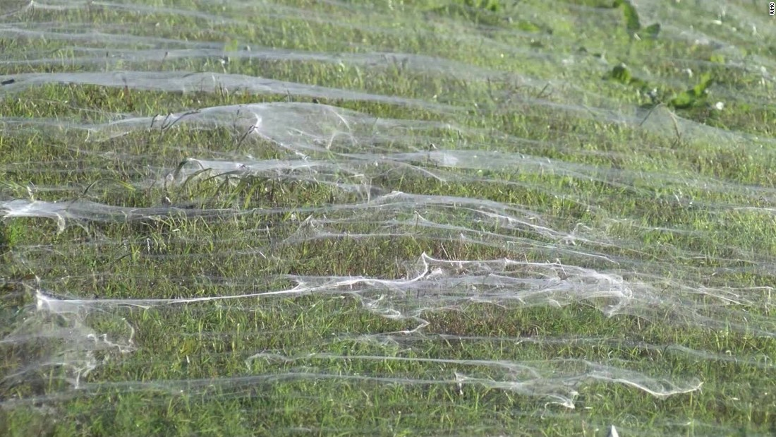 Spiders cause a North Memphis freakout
