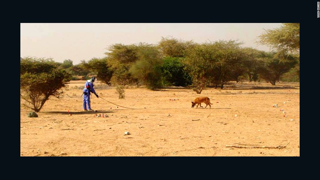 A dog on a land mine clearance operation in Girgir, eastern Sudan.