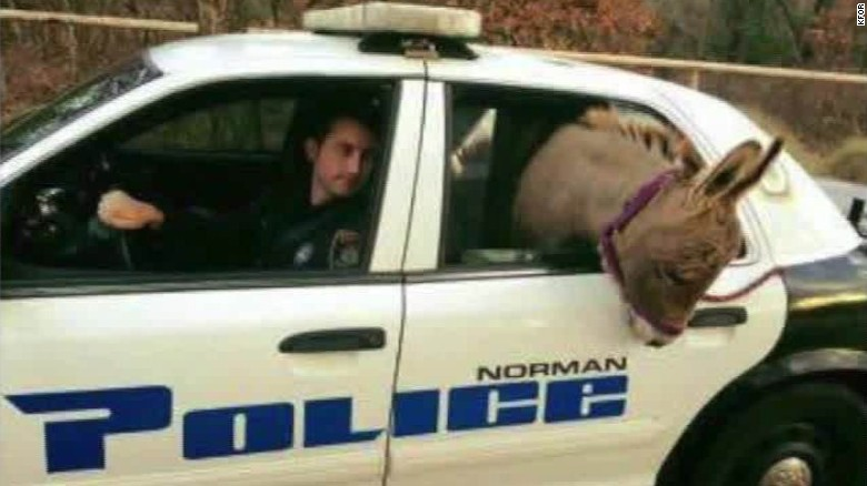 Cop takes donkey for a ride-along