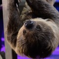 cnnheroes tribute sloth snooki closeup