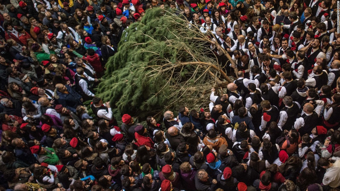 """Galejadors"" in Barcelona, Spain, carry their selected pine tree into a church during the Festival of the Pine on Wednesday, December 30. As part of a centuries-old tradition, the pine will be decorated with five bouquets of apples and wafers and hung inside the church until January 6."