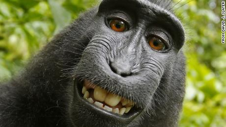 This 2011 selfie was the subject of PETA's lawsuit claiming Naruto the monkey was entitled to copyright protection.