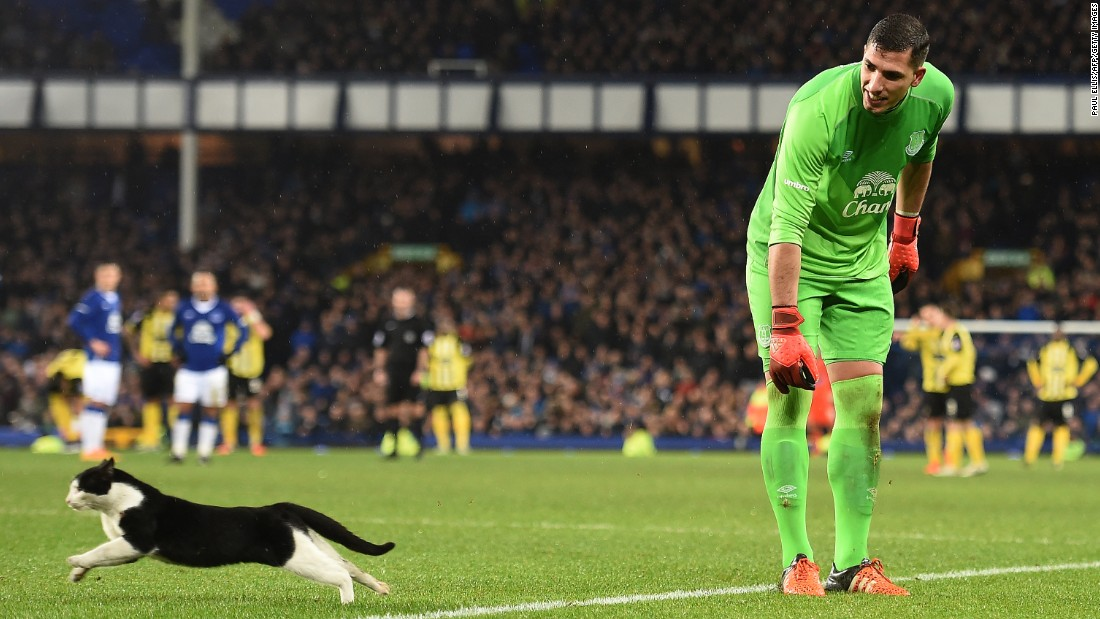 Everton goalkeeper Joel Robles tries to catch a cat that ran onto the field during an FA Cup match in Liverpool, England, on Saturday, January 9.