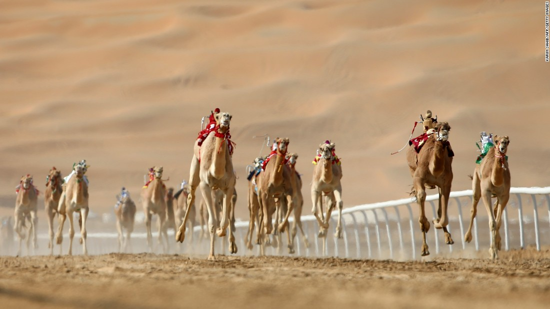 Camels race in the United Arab Emirates on Tuesday, January 5.
