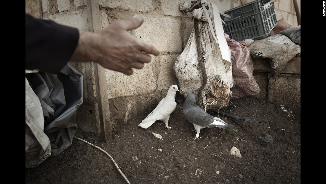 Birds outside a refugee camp in the Bekaa Valley.