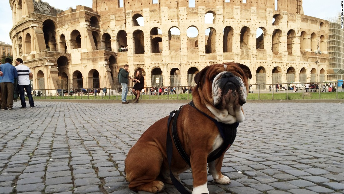 "The drivers were asked to take photos to contribute to a charity sale. Hamilton's contribution to the 2016 auction to benefit <a href=""http://www.gosh.nhs.uk/"" target=""_blank"">Great Ormond Street</a> is his pooch elegantly posed outside the Colosseum and titled ""Roscoe does Rome."""