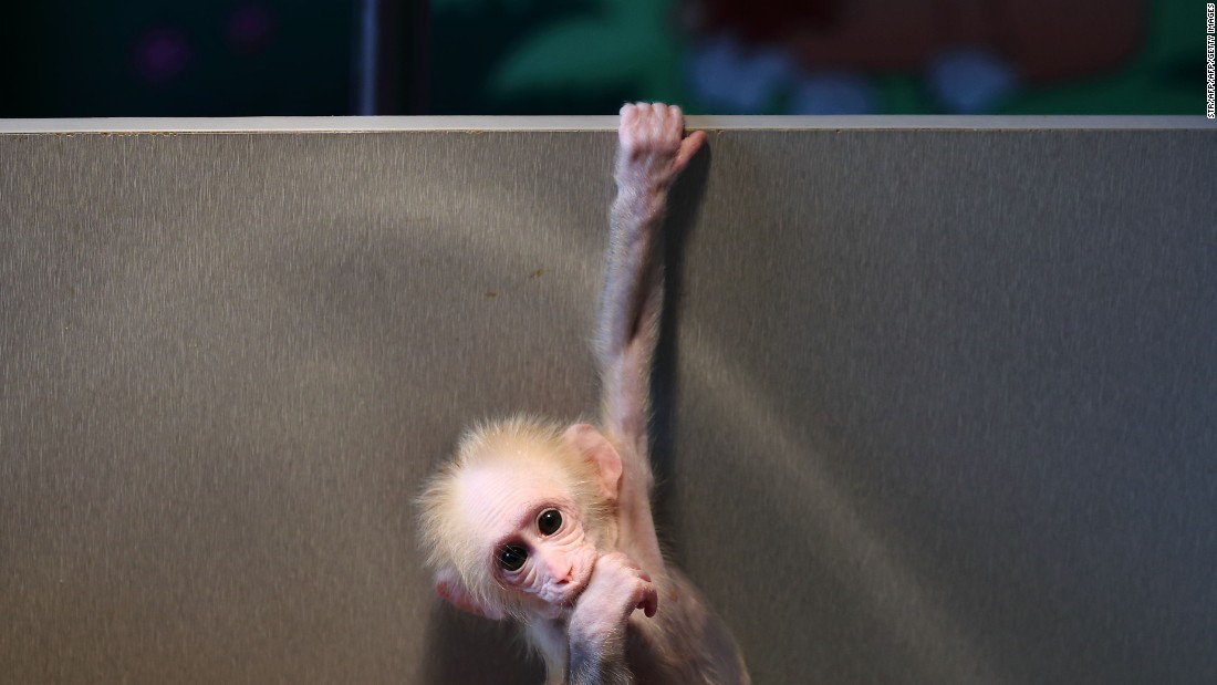 Chinese scientists create monkeys with autism gene