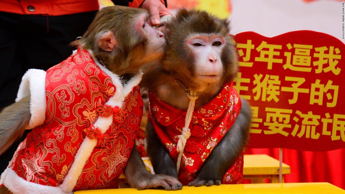 Monkeys share a smooch Thursday, January 28, at the Crazy Appleland Theme Park in Hangzhou, China.