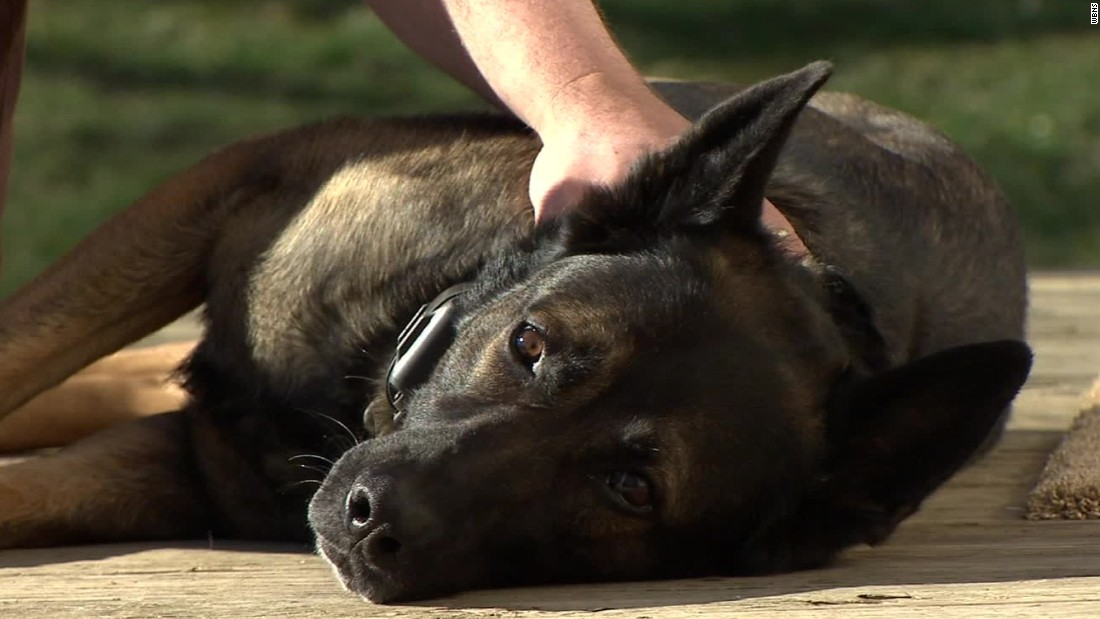 Retired Ohio police officer awaits word on how to keep old K-9 partner