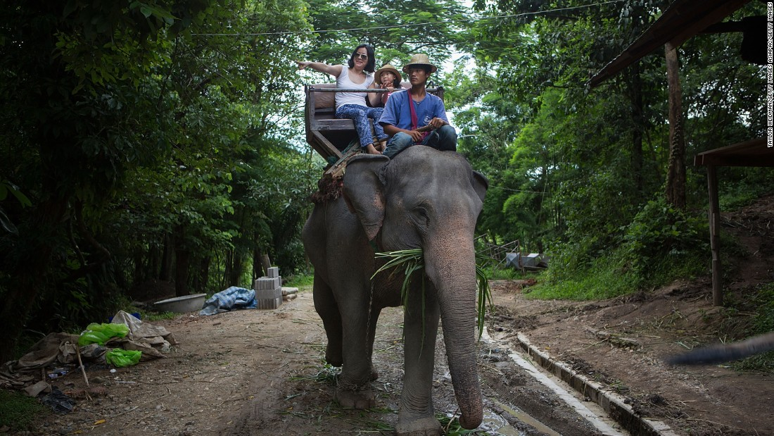 Scottish tourist killed by elephant in Thailand