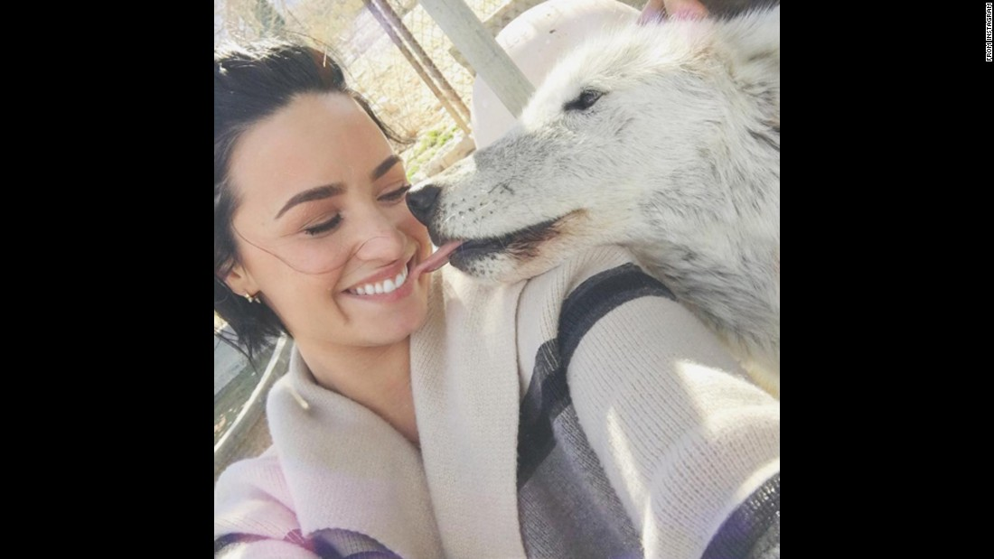 "Singer Demi Lovato gets a kiss in <a href=""https://www.instagram.com/p/BBMiC-IuKup/"" target=""_blank"">this selfie she posted from a wolf sanctuary</a> on Sunday, January 31."