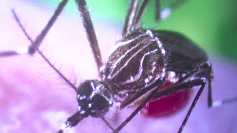 Officials: U.S. Zika case sexually transmitted