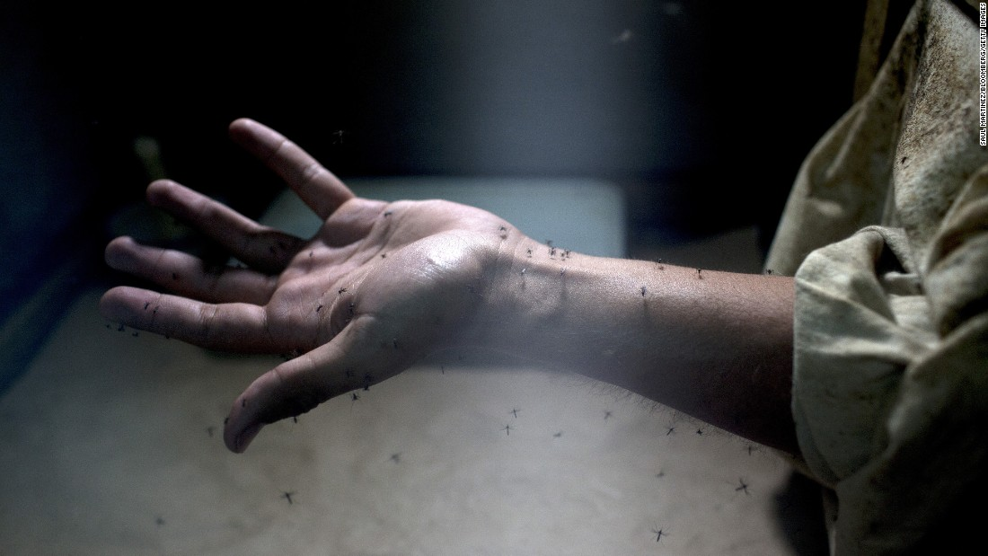 A lab worker exposes his arm to Aedes aegypti mosquitoes during testing at the Roosevelt Hospital in Guatemala City, Guatemala, on Monday, February 1.